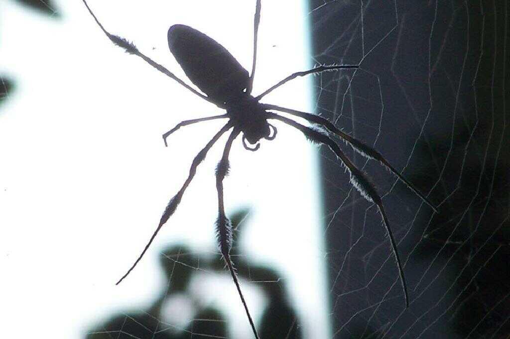 مكافحة الحشرات في المنزل
