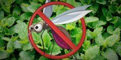 نباتات تحميك من بعوض الصيف و تعمل على طرد الحشرات بشكل نهائي